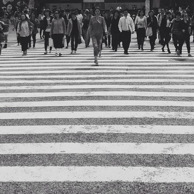 leader zebra large.jpg